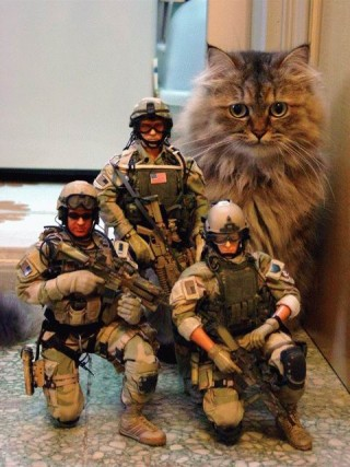 giant cat or toy soldiers