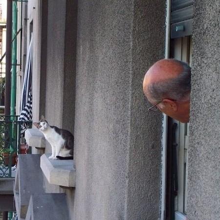 cat plays peek-a-boo