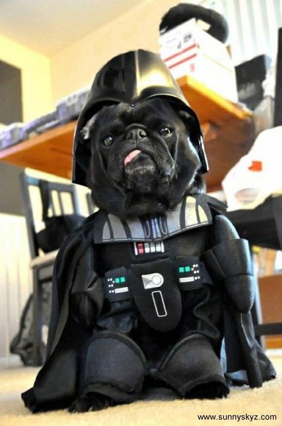 darth vader dog costume halloween