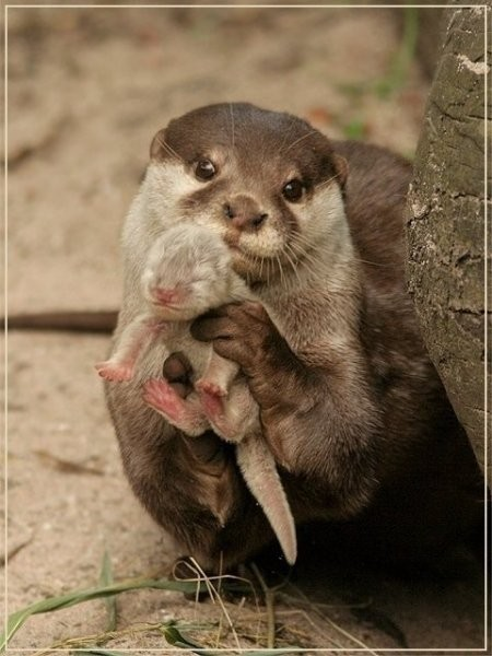 cute animals otter picture