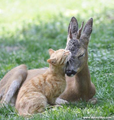 cute animals love cat deer