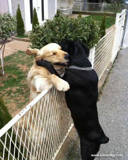dog friends hug