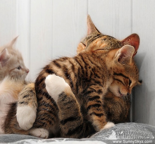 cute animals kittens hugging