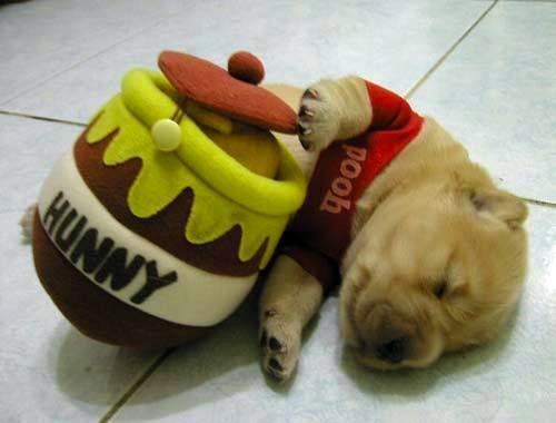 puppy winnie the pooh