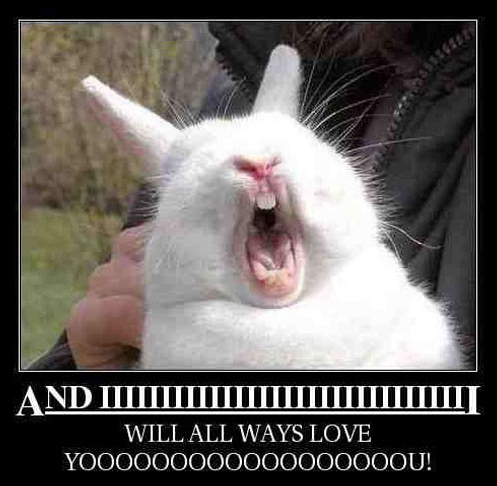 funny singing rabbit