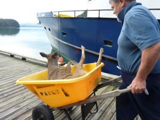 fisherman saves deer