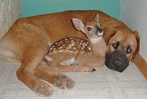 dog with deer
