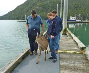 deer saved by fisherman