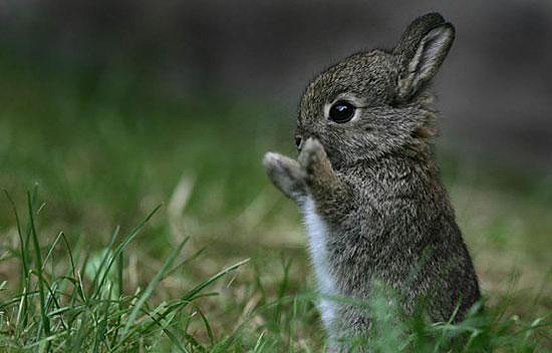 adorable baby bunny