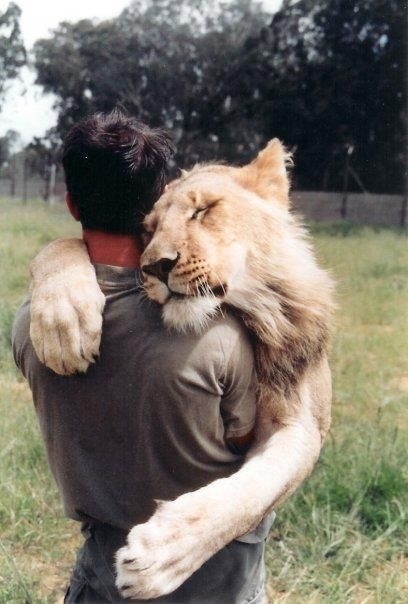 Feel Good Post of The Day 5qi6a-lion-hug