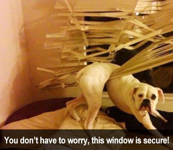dog caught in blinds