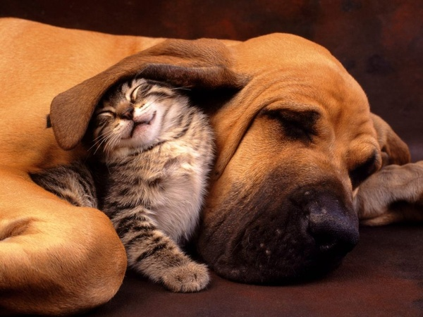animals cuddling