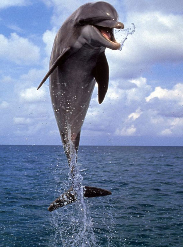 happy jumping dolphin