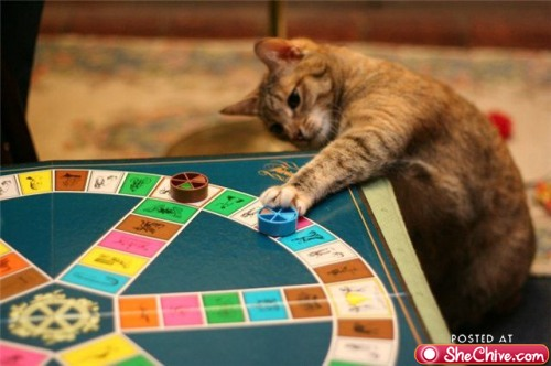 trivial pursuit cat
