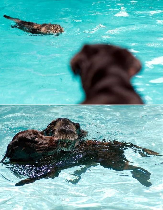 dog cat swim