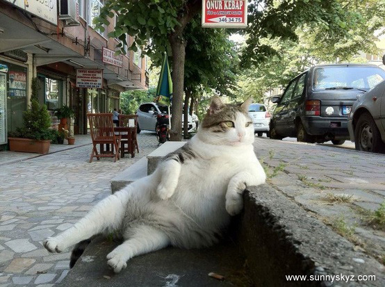 fat cat sitting