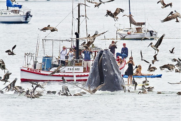 humpback whale gets close to viewers