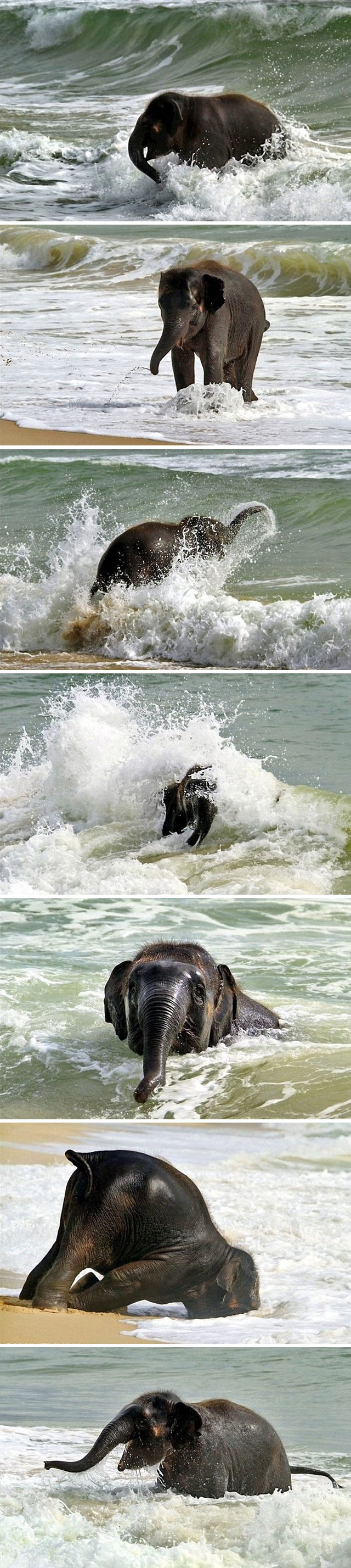baby elephant at the beach