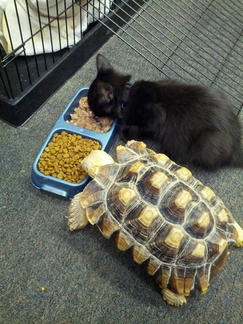 sharing cat and turtle