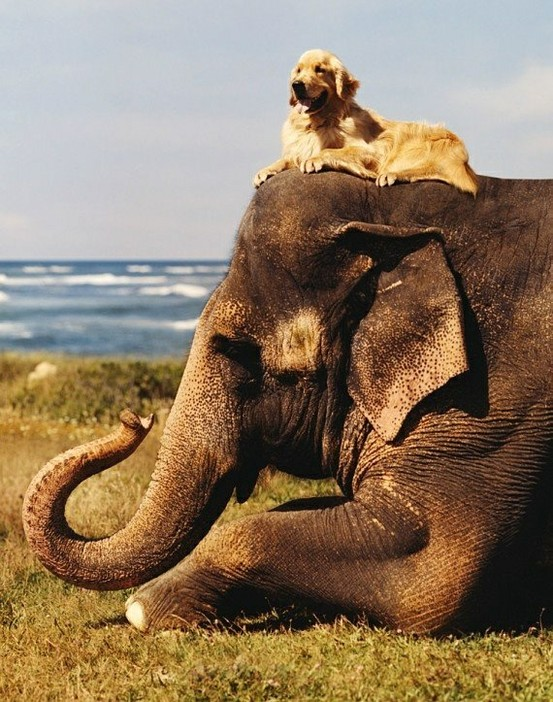 dog and elephant love