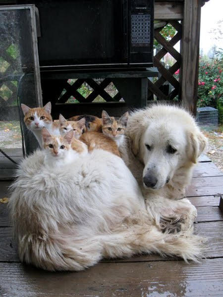 kittens on dog in the rain