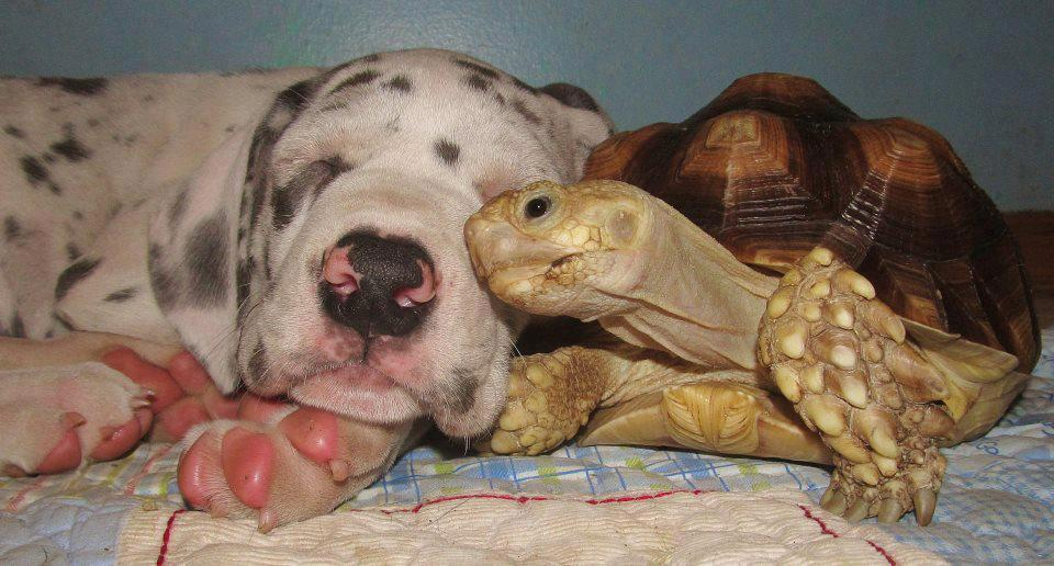 dog and turtle nap