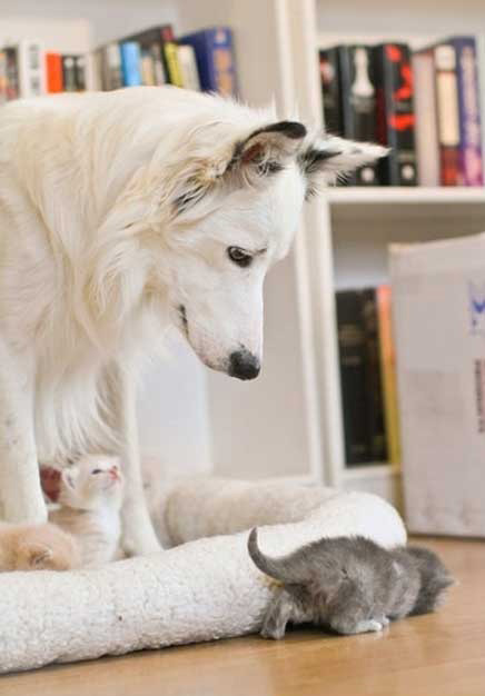 cute animals kittens and dog