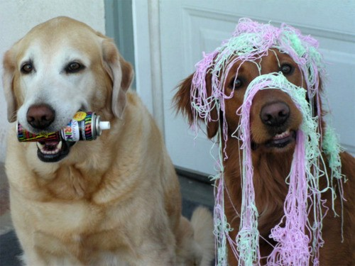 dogs silly string