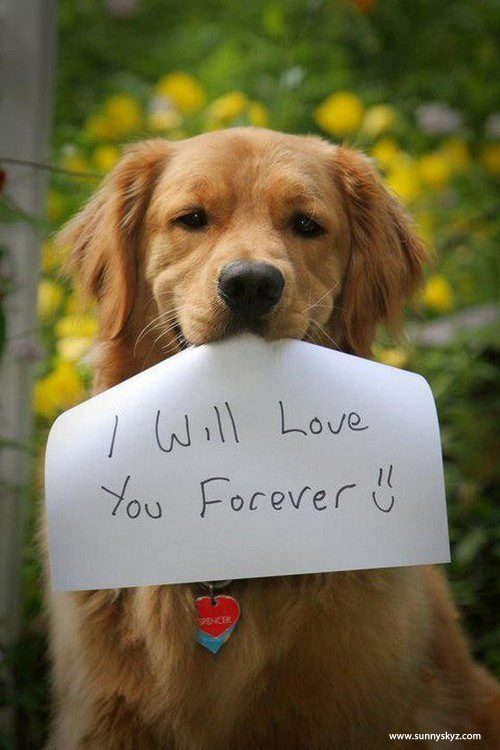Image result for dog love
