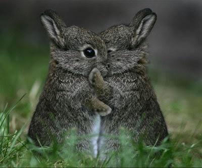 bunnies hugging