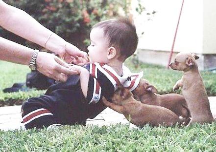 puppies lifting baby