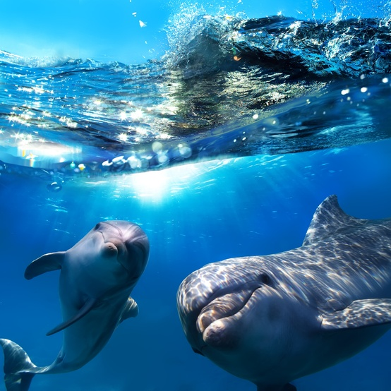 happy dolphin family