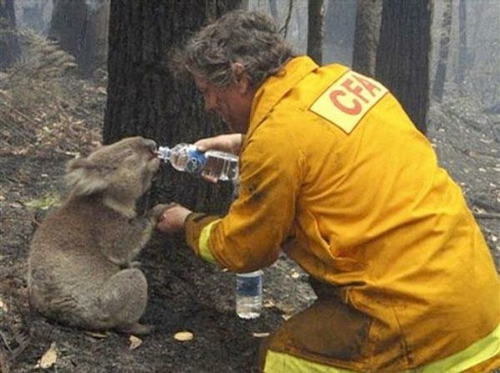 saving koala with water