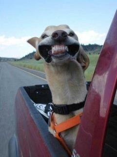 dog in wind
