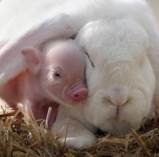 piglet and rabbit cute animals