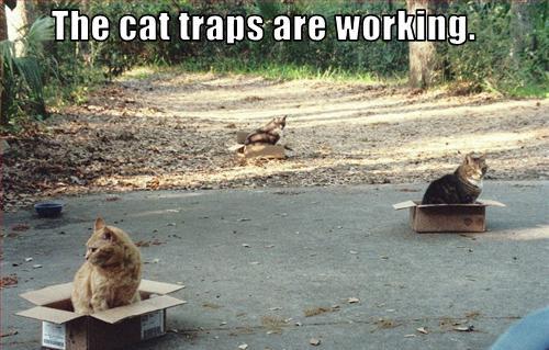 funny cat pictures cat traps