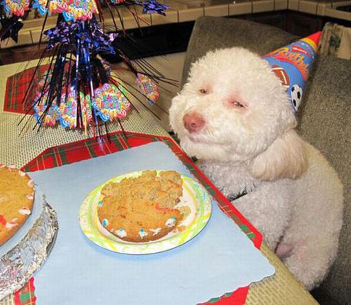 happy smiling dog birthday