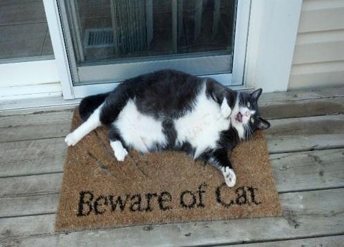 beware of cat - funny cat pictures
