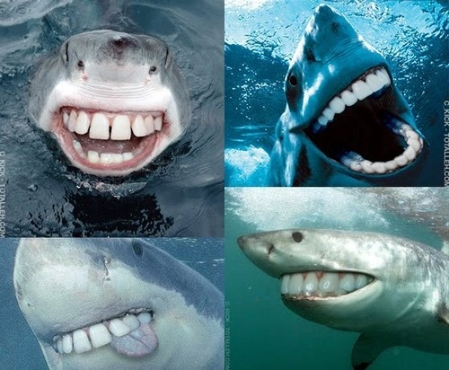 sharks with human teeth funny pictures