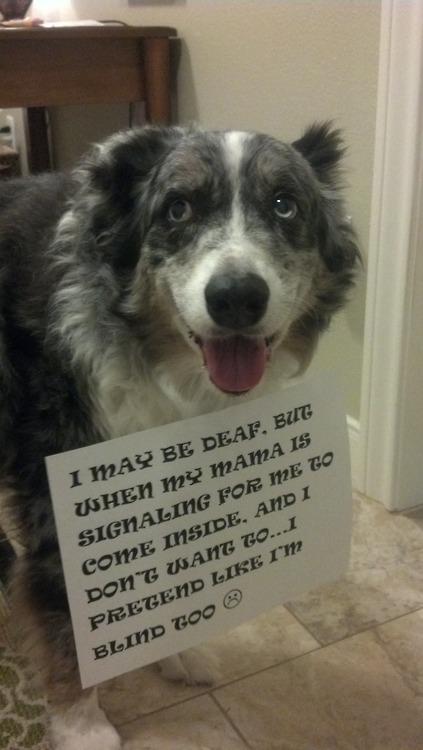 dog shaming funny