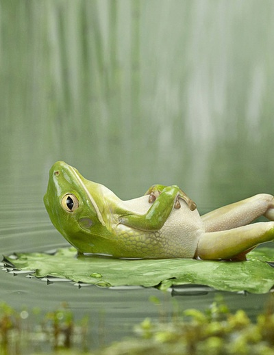 frog takes it easy cute funny animals