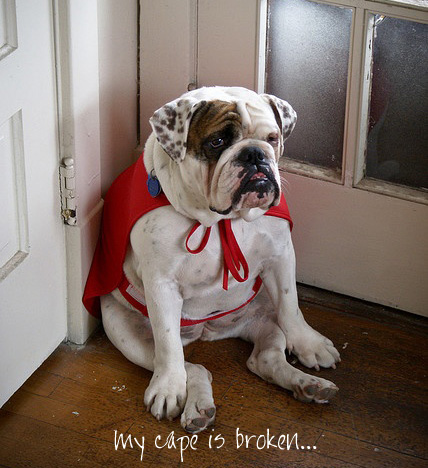 english bulldog superhero cape
