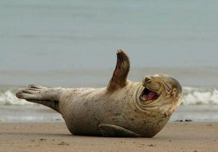 funny seal laughing