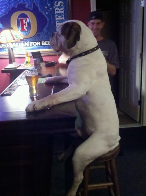 dog sitting at the bar
