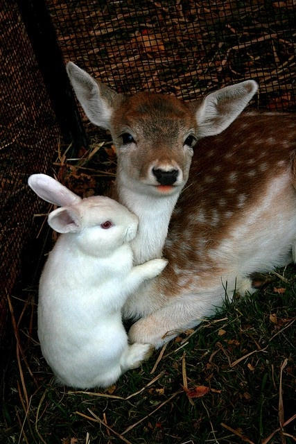 deer and bunny unlikely friends