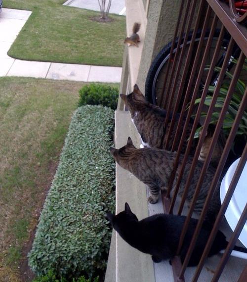 cats on a ledge