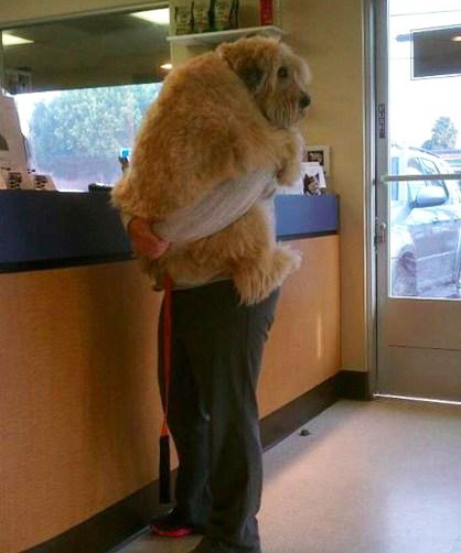 man holding big dog at vet