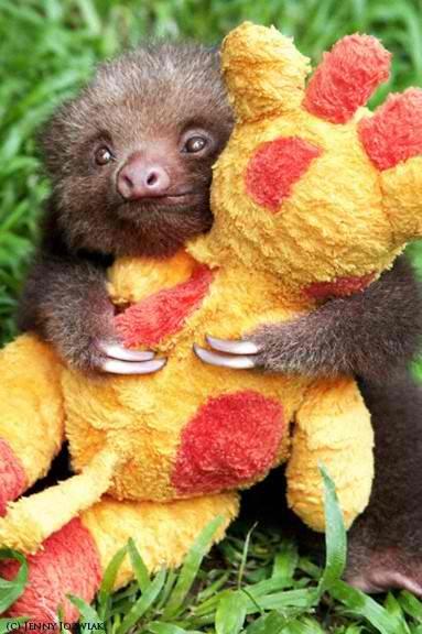 baby sloth hugging stuffed animal
