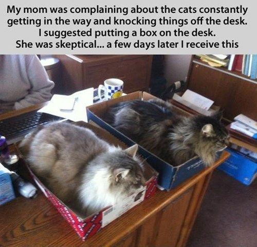 funny cats boxes