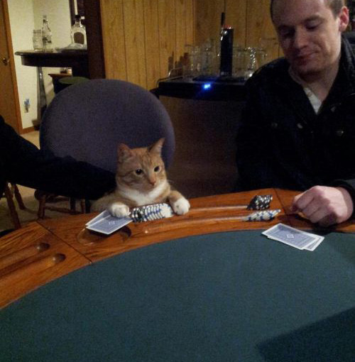 cat plays poker